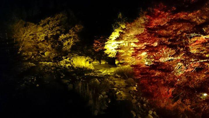 紅葉ライトアップ