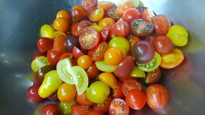 鏡野トマト