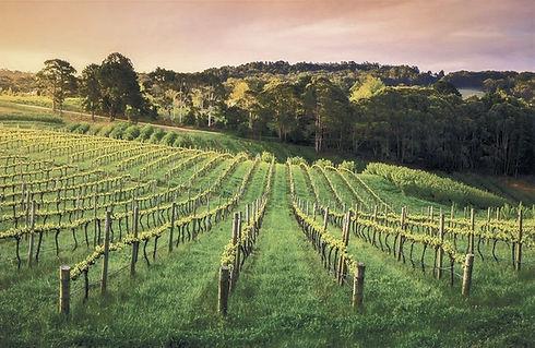 Adelaide-Hills-vineyard_edited.jpg