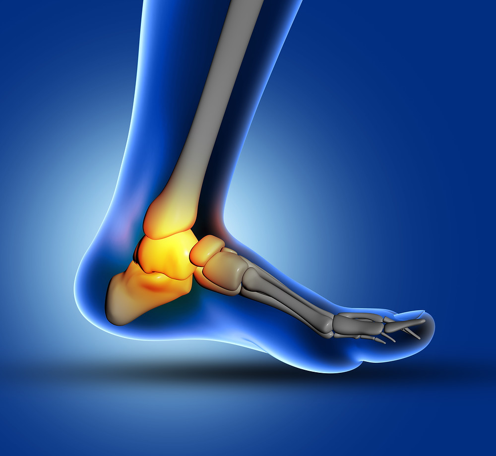 ankle and foot joint