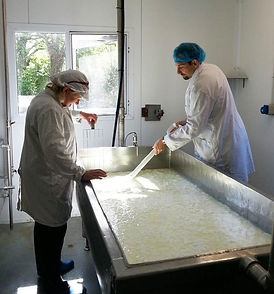 cheesemaking-002_edited.jpg