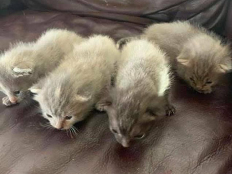 🆘 Urgent sponsors needed for mama cat with 4 kittens 🆘