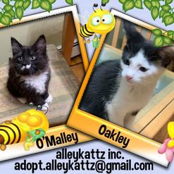 O'Malley & Oakley.jpg