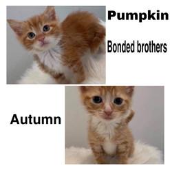 Pumpkin and autumn