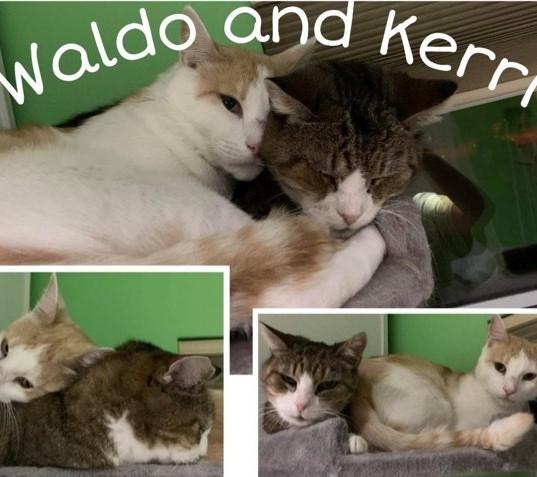Waldo & Kerry.jpg