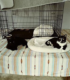 Aida & Layla available for adoption