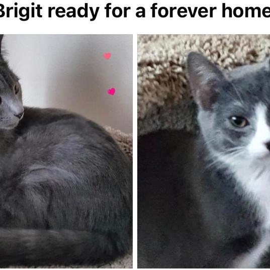 Basile & Brigit