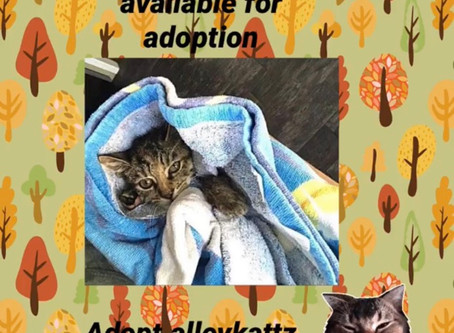 Chelle is available for adoption