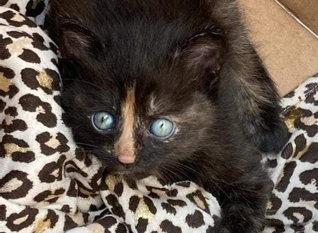 Foster needed for two kittens
