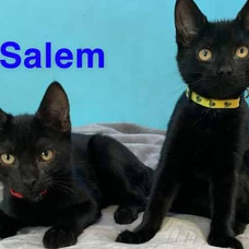 hershey & salem 1.jpg