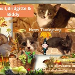 Basil, Bridgitte & Biddy
