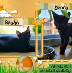 Sasha & Beans.jpg
