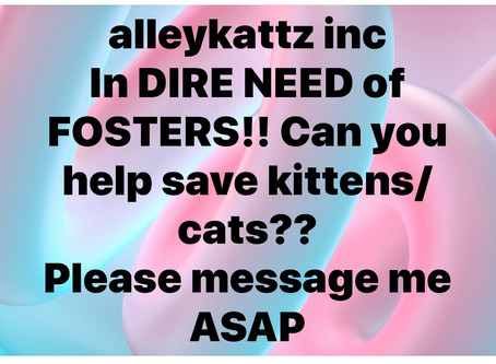 🆘 fosters needed 🆘