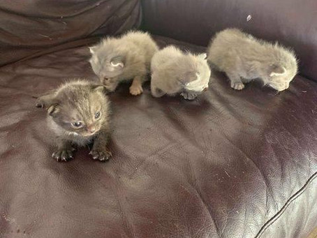Foster needed for mama and babies