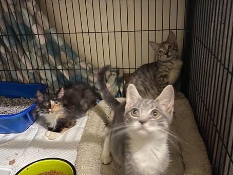 3 bonded kittens need forever homes