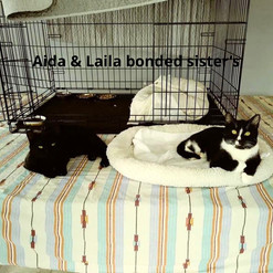Aida & Laila