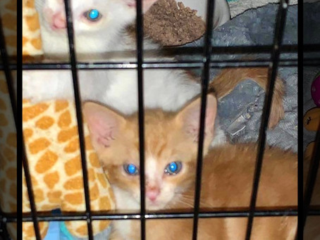 Vito & Paulie need a forever home