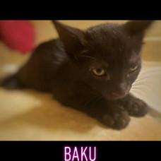 baku, brookie and star bonded