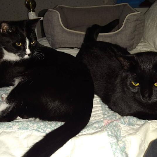 Aida & Layla