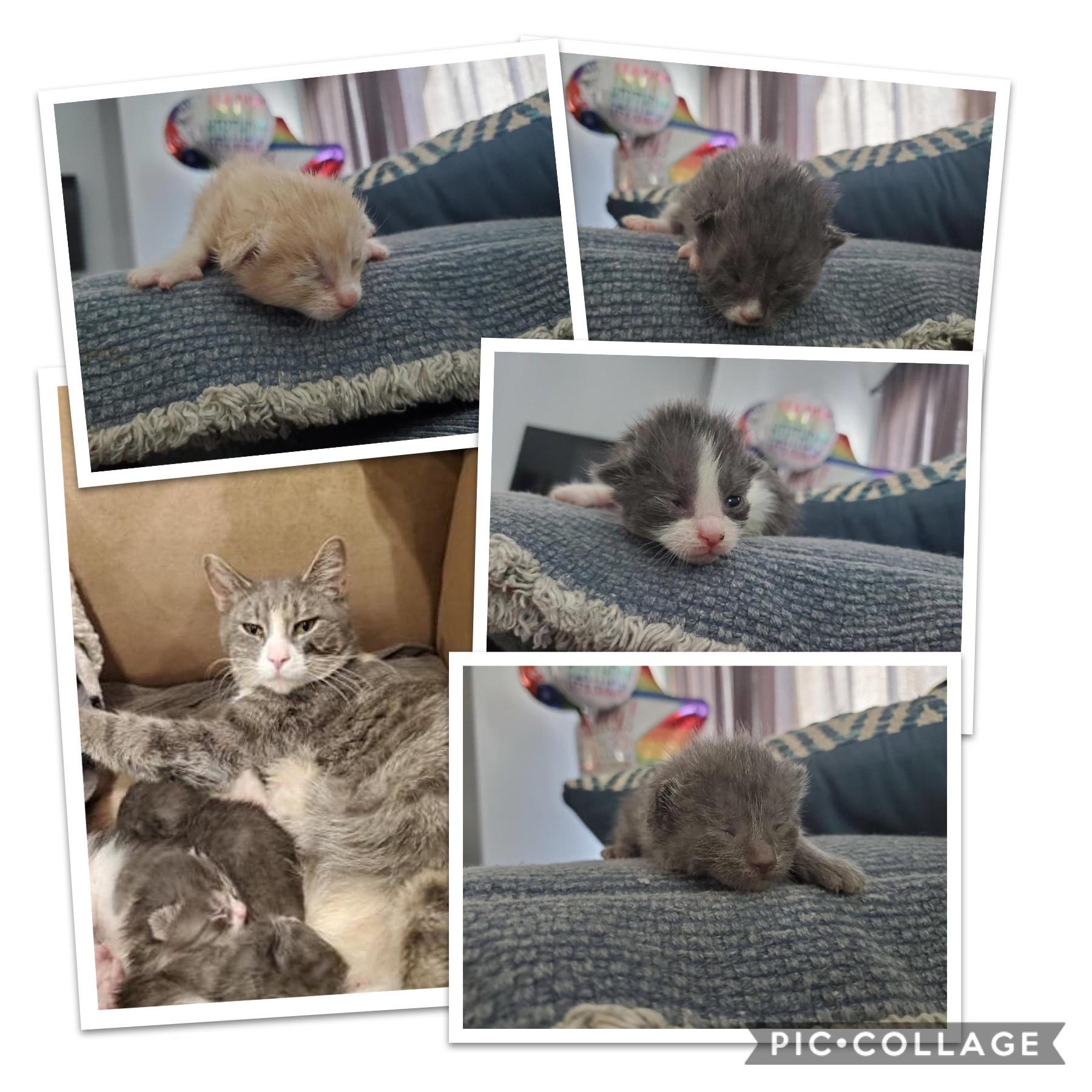 Mama & 6 kittens