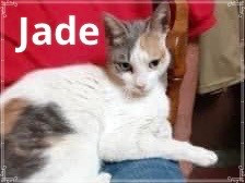 Jade needs a forever home