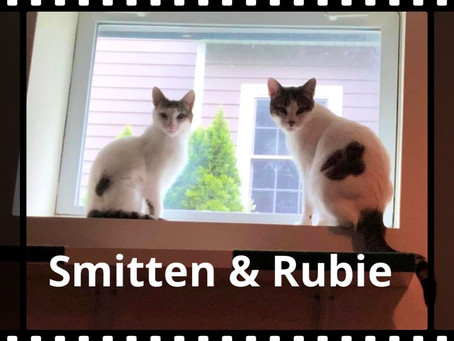Smitten & Rubie need a forever home