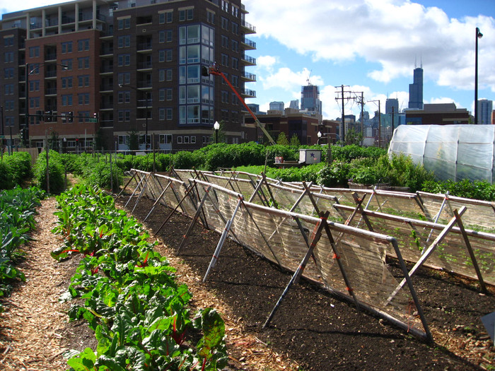 StuJardin: Kitchen gardens in the heart of the city