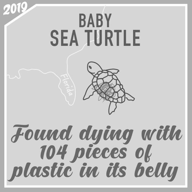 Sea-turtle-found-dead-with-plastic-in-th
