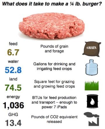 environmental impact, go green, meat, bad, eco friendly, meatless monday, whitney, antm, vegan, vegetarian