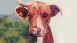 vegan, perspective, dog, face, cow, puppy, animal, cruelty, love, vegan, whitney, antm