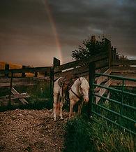 TroyFamilyPhotographer-9087_edited.jpg