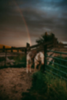 TroyFamilyPhotographer-9087.jpg