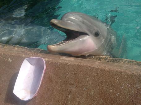 Atração Dolphin Cove do Sea World