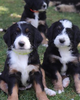 2 pups.jpg