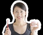 歯の模型と歯ブラシをもつ女性