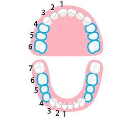 tooth-cad-min.jpg