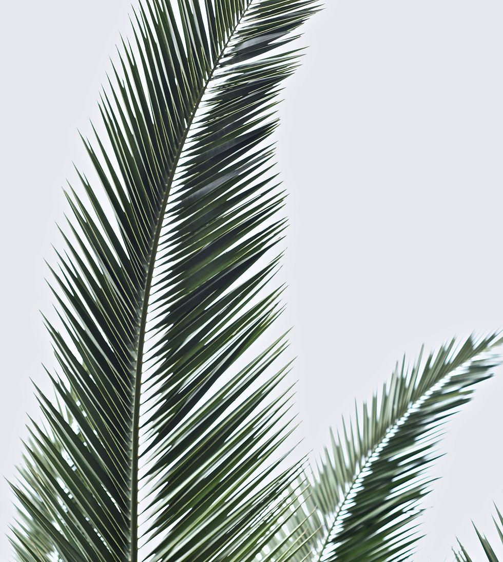 Green indoor plant on white background