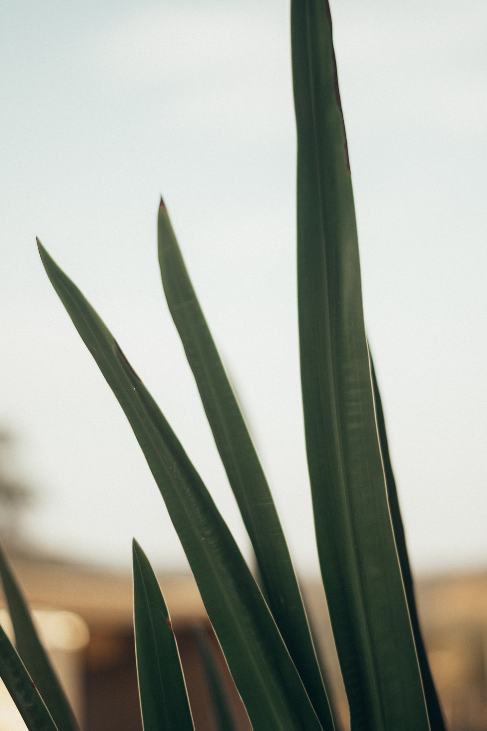 Simple photo of an indoor green plant