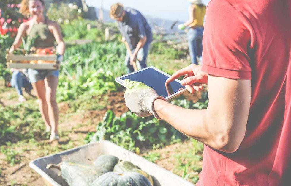 community garden and management