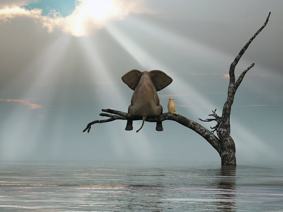 Elephant and cat sitting on a branch, contemplating sunshine