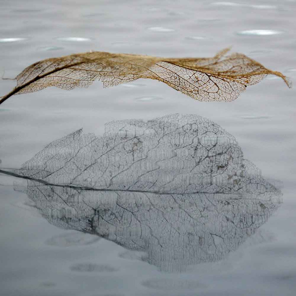 Leaf reflecting Karen Ussery Photography