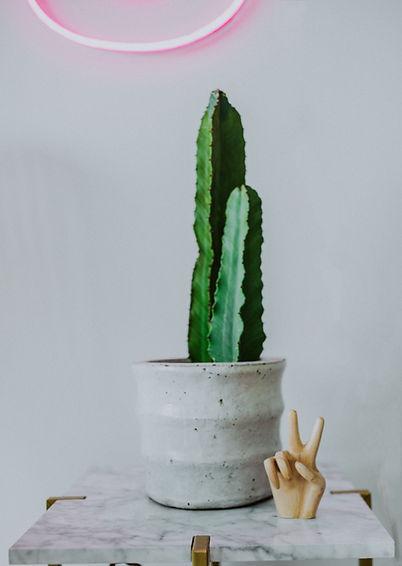 edited cactus.jpg