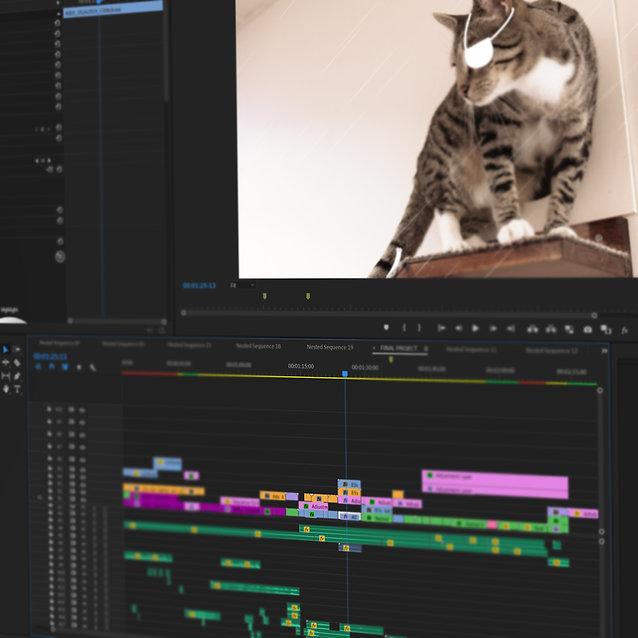 video editing cat barn video