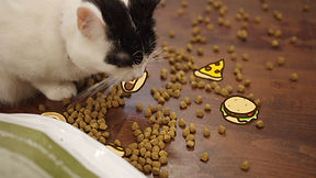 black and white cat eating cartoon pizza and burgers