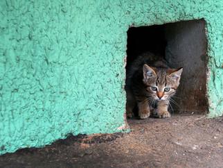 Открыть продухи для кошек!
