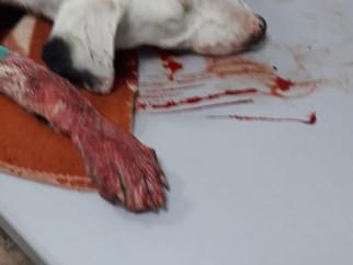 Продолжение истории избитого щенка в г. Аксай