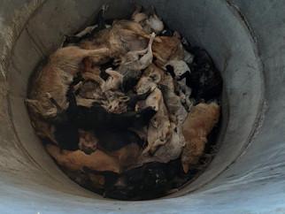 Убийства животных в р. Бурятия