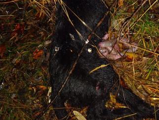 В Хабаровске жестоко убили двух щенков