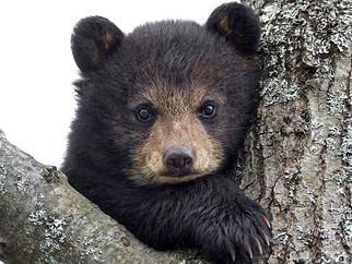 Убийство полицейскими медвежонка