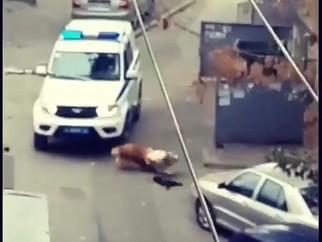 Полиция Ростова-на-Дону сбивает собаку